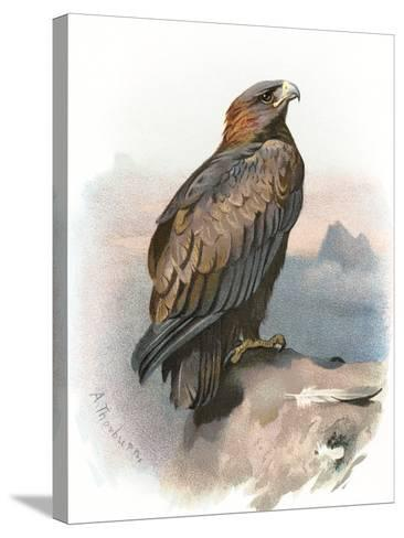 Golden Eagle, Historical Artwork-Sheila Terry-Stretched Canvas Print