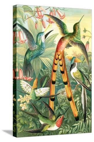 Hummingbirds, Historical Artwork-Sheila Terry-Stretched Canvas Print