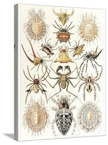 Arachnid Organisms, Artwork--Stretched Canvas Print