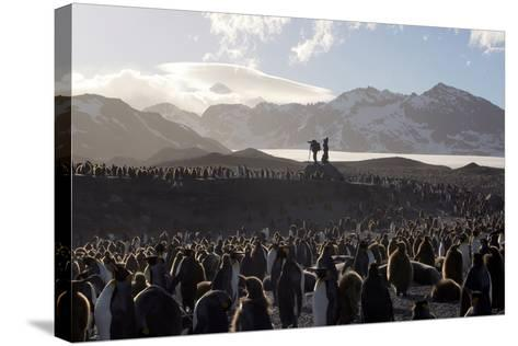 Penguin Breeding Colony Research-Charlotte Main-Stretched Canvas Print