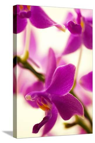 Phalaenopsis Flying Fire 'Sweetheart'-Maria Mosolova-Stretched Canvas Print