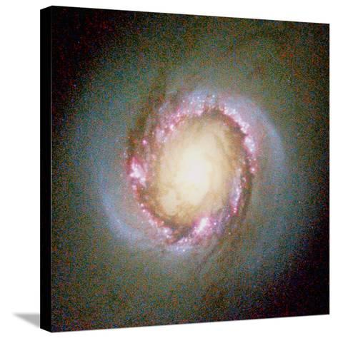 Star Birth In Galaxy NGC 4314--Stretched Canvas Print