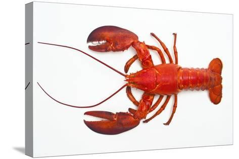 Atlantic Lobster-David Nunuk-Stretched Canvas Print
