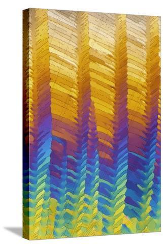 Caffeine Crystals, Light Micrograph-David Parker-Stretched Canvas Print