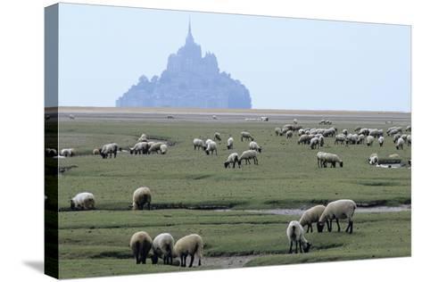 Sheep Grazing-David Nunuk-Stretched Canvas Print