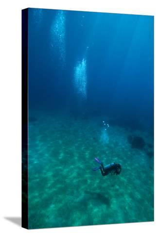 Scuba Diving-Matthew Oldfield-Stretched Canvas Print
