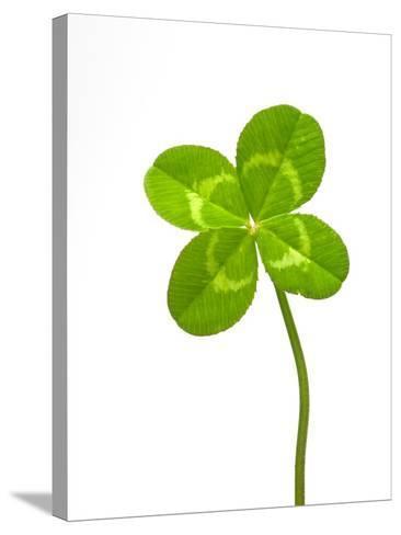 Four-leaf Clover-David Nunuk-Stretched Canvas Print