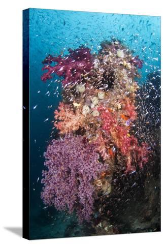 Coral Reef Community-Matthew Oldfield-Stretched Canvas Print