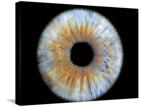 Computer-enhanced Blue-grey Iris of the Eye-David Parker-Stretched Canvas Print