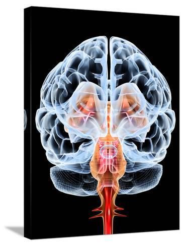 Brain, Artwork-PASIEKA-Stretched Canvas Print