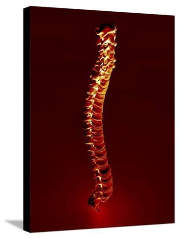 Human Spine, Artwork-PASIEKA-Stretched Canvas Print