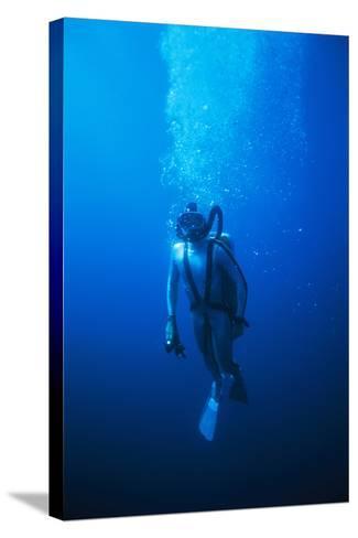 Scuba Diver-Alexis Rosenfeld-Stretched Canvas Print