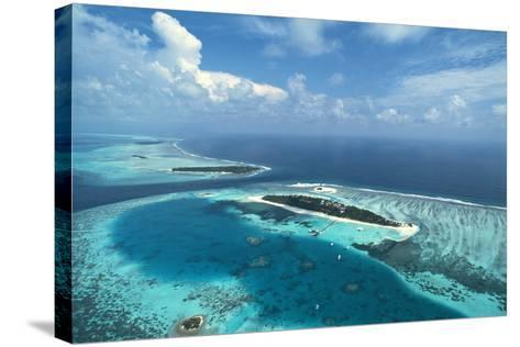Coral Islands-Alexis Rosenfeld-Stretched Canvas Print