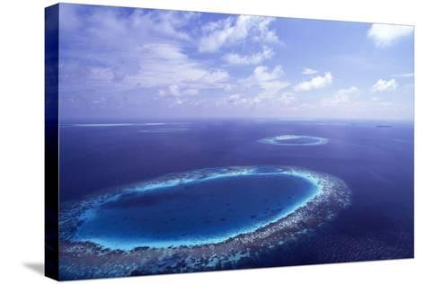Coral Reef-Alexis Rosenfeld-Stretched Canvas Print