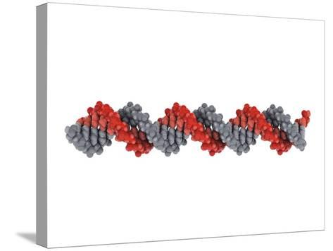 B-DNA Molecule-Visual Science-Stretched Canvas Print