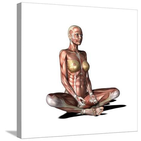 Female Muscles, Artwork-Friedrich Saurer-Stretched Canvas Print