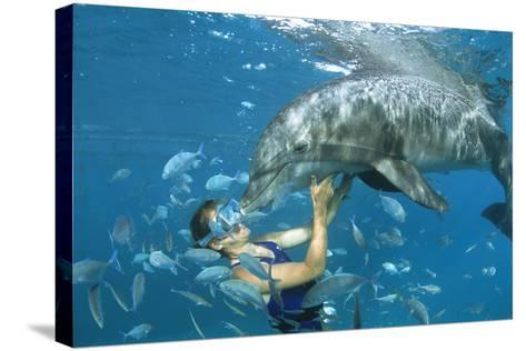 Dolphin And Swimmer-Alexis Rosenfeld-Stretched Canvas Print