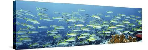 Reef Scene-Alexander Semenov-Stretched Canvas Print
