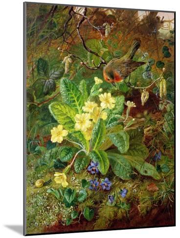 Primrose and Robin-William John Wainwright-Mounted Giclee Print