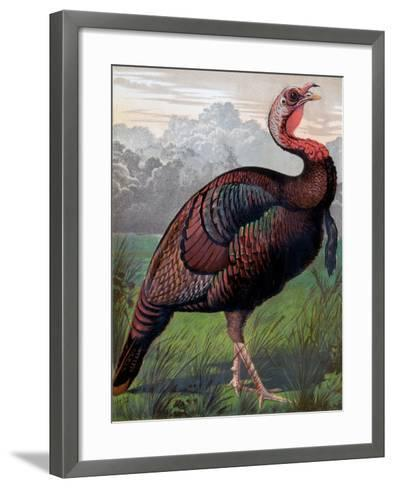 The Wild American Turkey Cock, Illustration from 'Cassell's Poultry Book', Engraved by Vincent…- Ludlow (After)-Framed Art Print