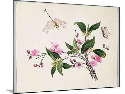 Cherry Blossom (?) Dragonfly and Butterfly--Mounted Giclee Print
