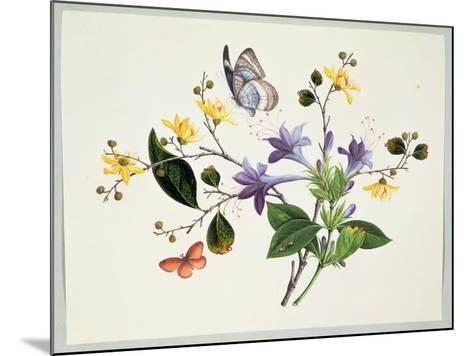 Flower Study and Insects--Mounted Giclee Print