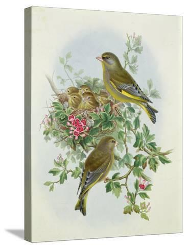 Greenfinch, 1873-John Gould-Stretched Canvas Print