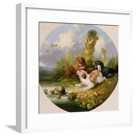 Three Spaniels Flushing Mallard-George Armfield-Framed Art Print
