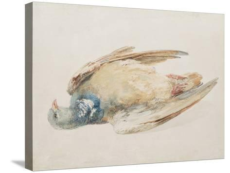 Pigeon, from the Farnley Book of Birds, C.1816-J^ M^ W^ Turner-Stretched Canvas Print