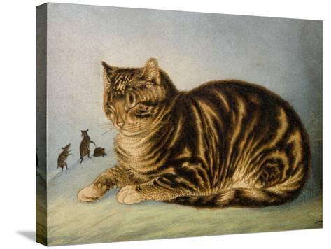 Puss Napping-George Baxter-Stretched Canvas Print