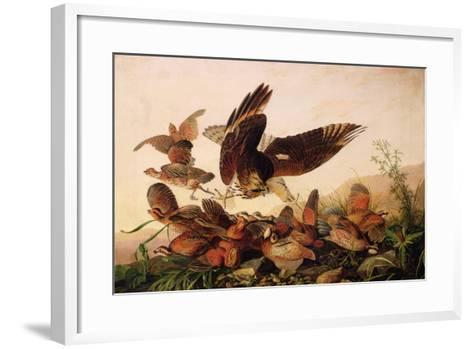 Red-Shouldered Hawk Attacking Bobwhite Partridges, 1827-John James Audubon-Framed Art Print