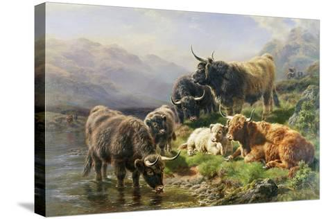 Highland Cattle-William Watson-Stretched Canvas Print