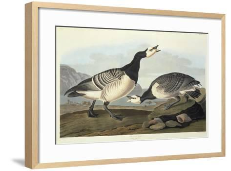 Barnacle Geese-John James Audubon-Framed Art Print
