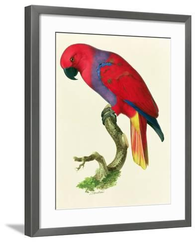 Red Parrot-Jacques Barraband-Framed Art Print
