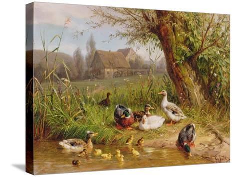 Mallard Ducks with their Ducklings-Carl Jutz-Stretched Canvas Print