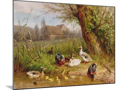 Mallard Ducks with their Ducklings-Carl Jutz-Mounted Giclee Print