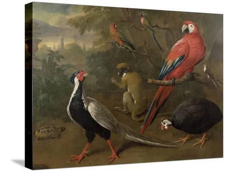 Pheasant, Macaw, Monkey, Parrots and Tortoise-Charles Collins-Stretched Canvas Print
