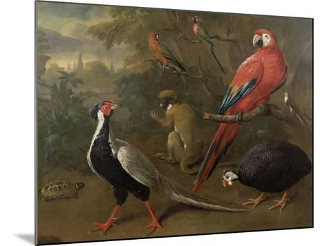Pheasant, Macaw, Monkey, Parrots and Tortoise-Charles Collins-Mounted Giclee Print