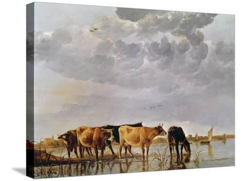 Cows in a River, C.1650-Aelbert Cuyp-Stretched Canvas Print