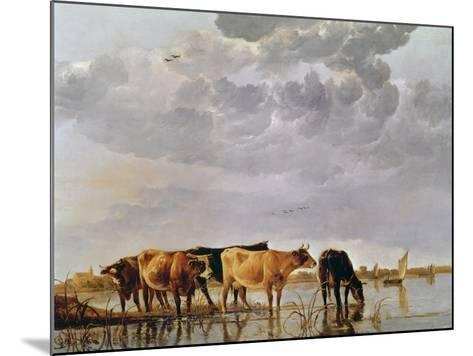 Cows in a River, C.1650-Aelbert Cuyp-Mounted Giclee Print