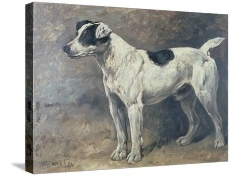 A Jack Russell, 1891-John Emms-Stretched Canvas Print