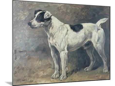 A Jack Russell, 1891-John Emms-Mounted Giclee Print
