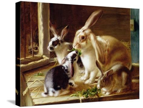 Long-Eared Rabbits in a Cage, Watched by a Cat-Horatio Henry Couldery-Stretched Canvas Print
