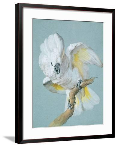A Great White Crested Cockatoo-Aert Schouman-Framed Art Print