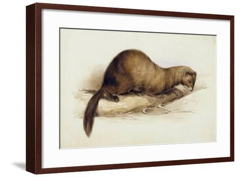 A Weasel, 1832-Edward Lear-Framed Art Print