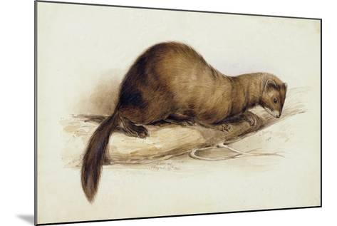 A Weasel, 1832-Edward Lear-Mounted Giclee Print