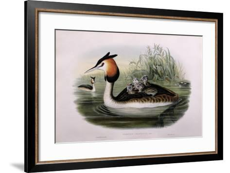 Great Crested Grebe (Podiceps Cristatus)-John Gould and H.C. Richter-Framed Art Print