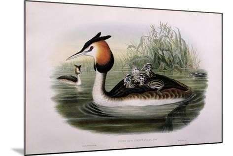 Great Crested Grebe (Podiceps Cristatus)-John Gould and H.C. Richter-Mounted Giclee Print