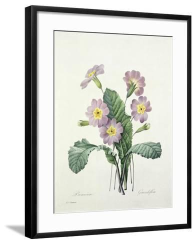 Primula (Primrose), Engraved by Bessin, from 'Choix Des Plus Belles Fleurs', 1827-Pierre-Joseph Redout?-Framed Art Print
