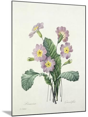 Primula (Primrose), Engraved by Bessin, from 'Choix Des Plus Belles Fleurs', 1827-Pierre-Joseph Redout?-Mounted Giclee Print